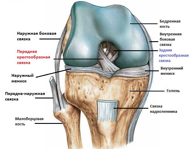 Разрыв крестовидной связки коленного сустава операция цена сустав определение общий план строения